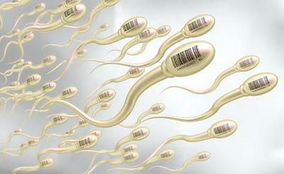 补充六大营养,帮助男性提高精子质量