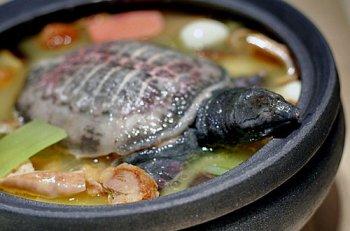 孕妇能吃甲鱼吗?怀孕吃甲鱼好不好?