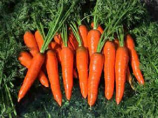 孕妇能吃胡萝卜吗?怀孕期间能生吃胡萝卜吗?