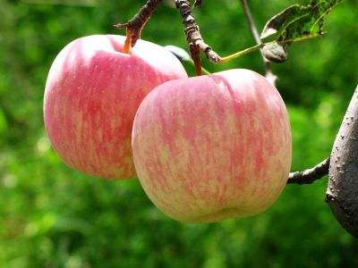 孕早期什么水果能吃?什么水果不能吃