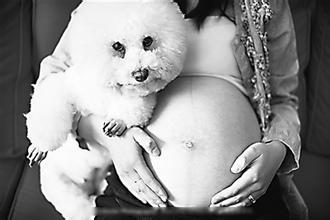 孕妇感染弓形虫病有哪些症状?如何治疗和预防