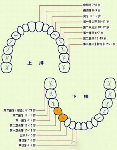 儿童换牙的时间与顺序是什么样的?