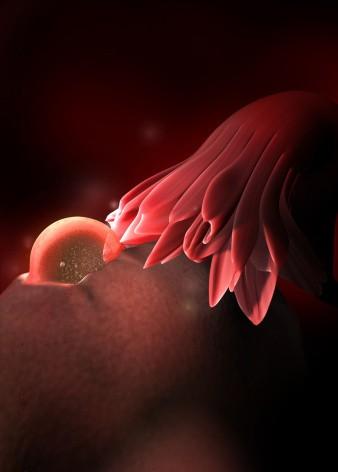 40周完整详细的胎儿发育过程图(彩色3D图)