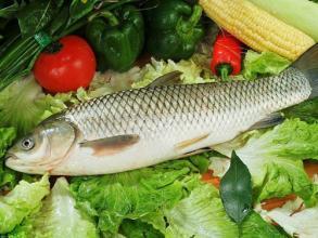 孕妇能吃草鱼吗?怀孕吃草鱼有好处吗