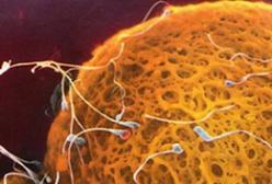 受精卵着床需要多长时间?受精卵着床过程揭秘