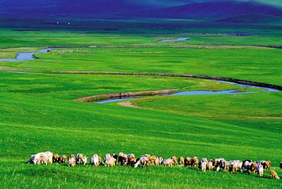 孕妇能去大草原吗?怀孕期间去草原旅游应注意什么