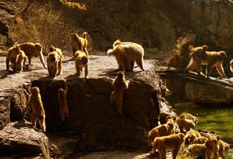 孕妇可以去动物园吗?怀孕期间去动物园看动物应注意什么