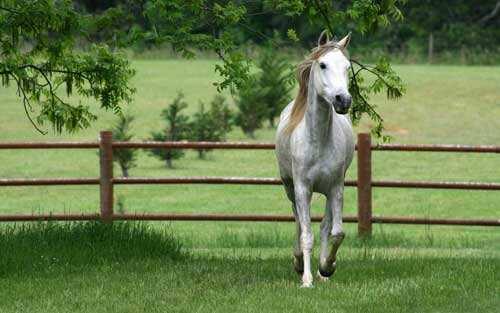 孕妇梦见马是什么意思?怀孕梦到白马是不是有好事发生