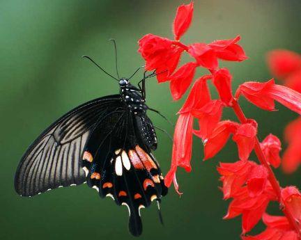 梦见蝴蝶在花丛中飞舞