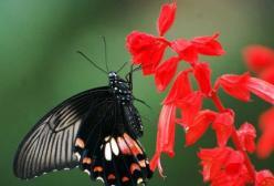 孕妇梦见蝴蝶是什么含义?怀孕梦到蝴蝶好不好
