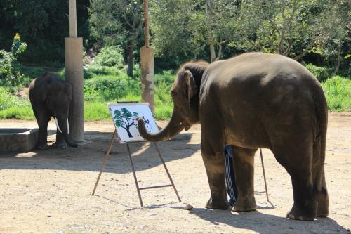 孕妇梦见大象是胎梦吗?怀孕梦见大象是好事吗