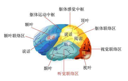 如何开发宝宝的右脑?让宝宝全面发展