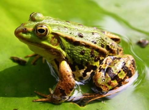 孕妇梦见青蛙是什么意思?怀孕梦见青蛙是生男还是生女