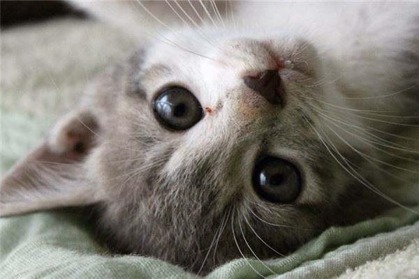 孕妇梦见把猫赶走了会怎么样