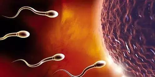 拥有优质的精子 才能生优秀的男宝宝女宝宝!