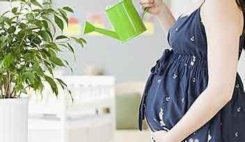 勤奋的孕妇更能做好胎教