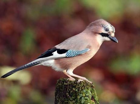 孕妇能养鸟吗?怀孕养鸟对胎儿有影响吗?