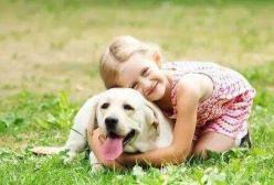 孩子想养狗!家长是拒绝还是同意呢?